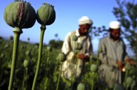 Afghanistan untaps important natural resource...
