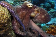 Spanish zoo hope to buy Psychic Octopus Paul