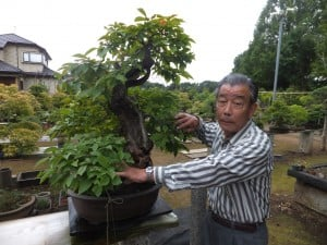 Iimura shows bonsai trees
