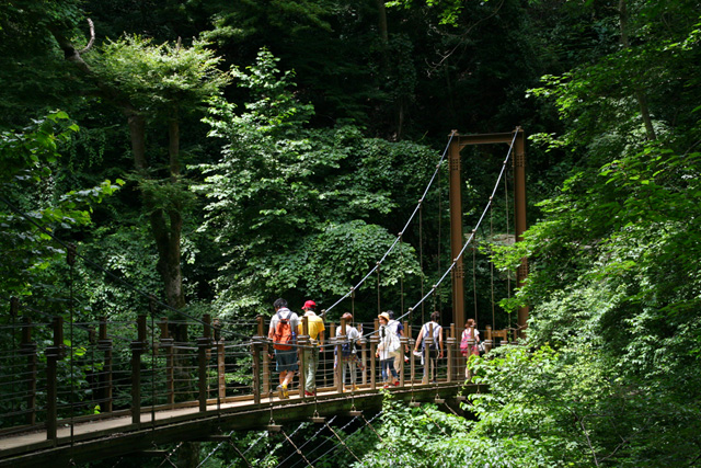 Mount Takao Suspension Bridge Andrew Ng