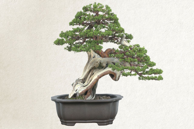 You could buy one like this at the Bonsai and Greenery Fair in Azabu Juban