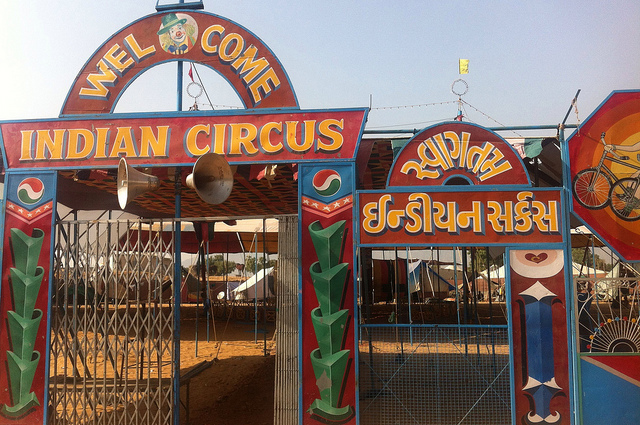 india-weighs-circus-ban