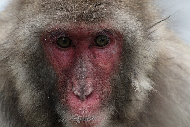 victims-of-miyazaki-prefecture-monkey-attacks-will-be-compensated