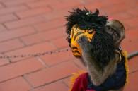 Maskedmonkey