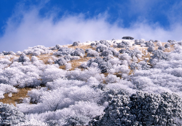 Trees silvered with frost on the mountains above Beppu