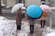 umbrellas-in-the-snow