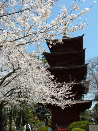 hokekyoji-cherry-blossoms