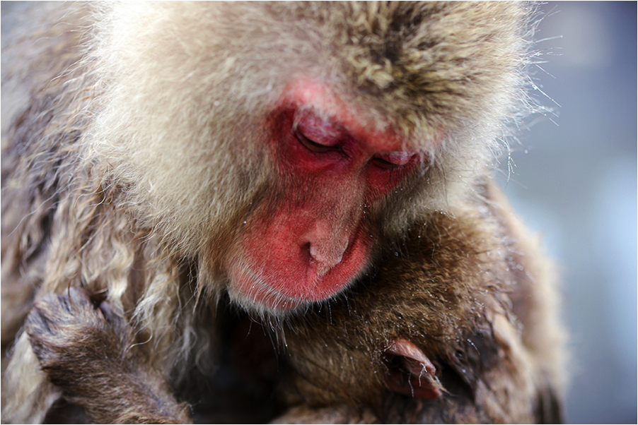 snow-monkey-mom