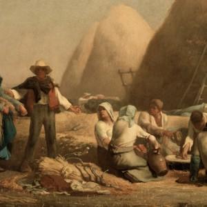 Millet-harvesters
