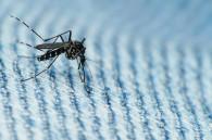 dengue-fever-in-japan