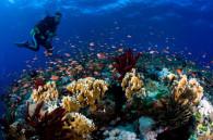 Diving-Okinawa