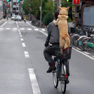 new-bicycle-rules-japan-2