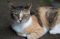 ikebukuro-cat-park