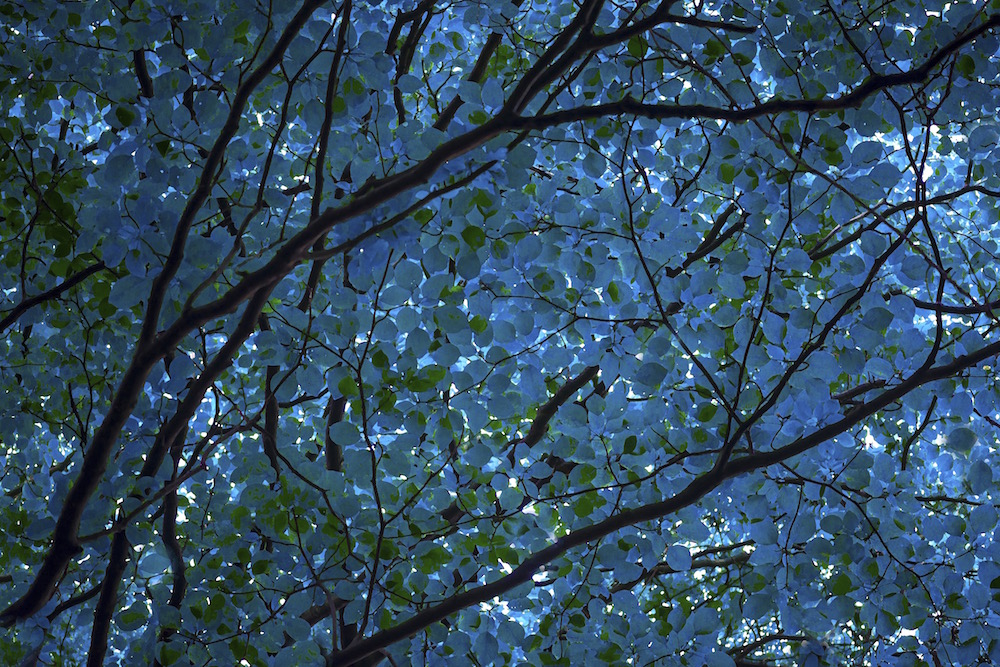 Canopy in Blue and Green