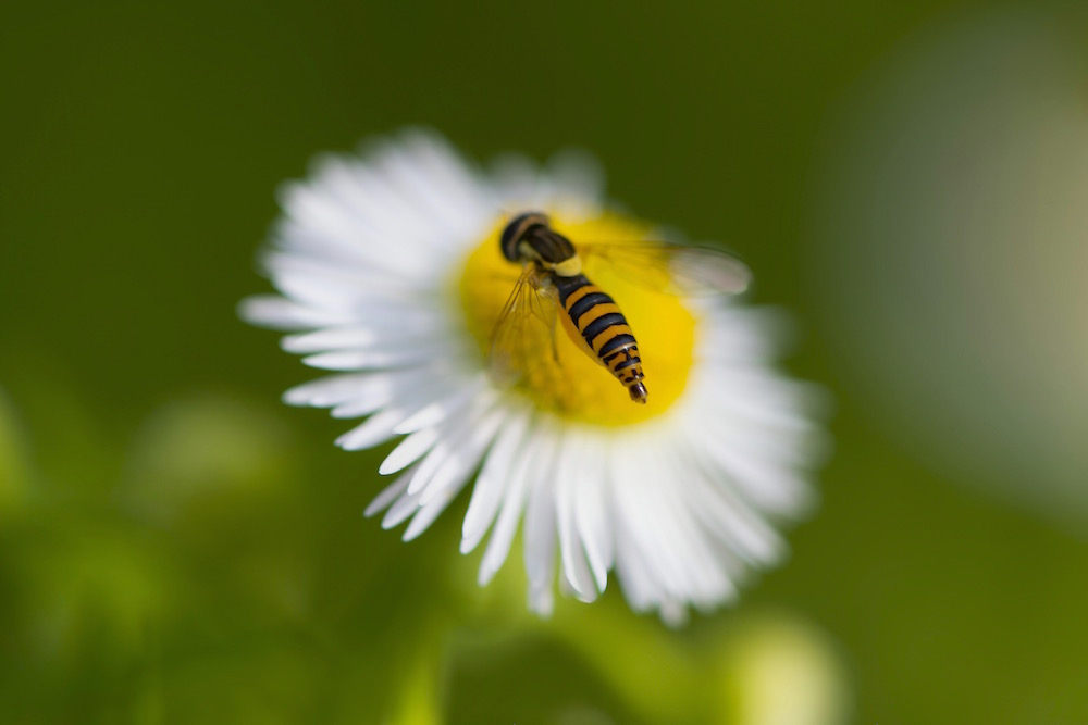 Newly Hatched Bee