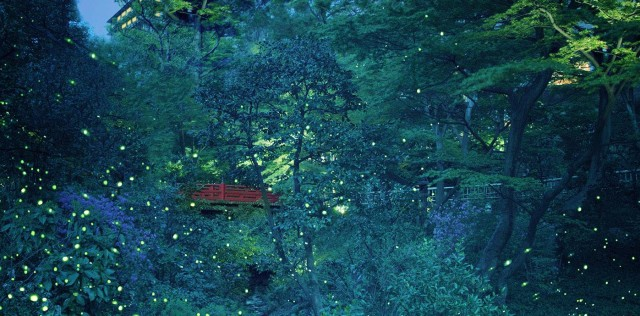 chinzanso fireflies