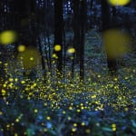 Where to Catch a Glimpse of Fireflies Around Tokyo