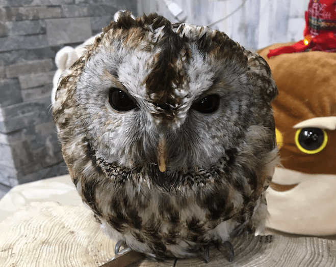 owl cafe search