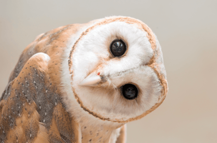 owl-cafe-search