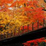 10 Kanto Spots to Make Your Photos of Autumn in Japan Pop