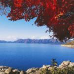 Explore Akita Through the Sense of Touch