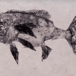 Gyotaku: The Japanese Art of Printing Fish