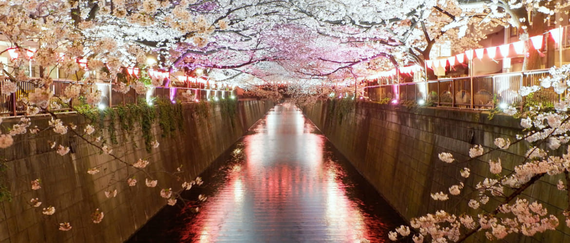 Top 14 Most Beautiful Places To See Cherry Blossoms In Tokyo Tokyo Weekender