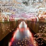 Top 14 Most Beautiful Places to See Cherry Blossoms in Tokyo