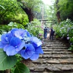 5 Top Spots to View Japan's Hydrangeas in June