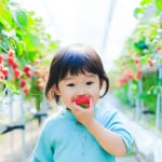 Tokyo Daddy Issues: The Secret Taste of Strawberries