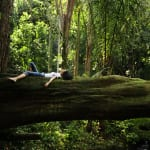 "What Is ""Forest Bathing"" and Can It Really Help Heal Us?"