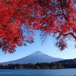 The Ultimate Guide to Autumn Foliage In and Around Tokyo