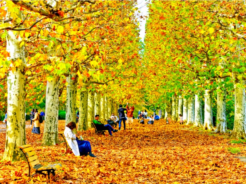 The Ultimate Guide to Autumn Foliage In and Near Tokyo