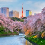 Sakura Surprise: Japan's Cherry Blossoms Flowering in October