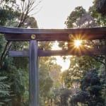 Learning Patience from Arborists of Old: The Evolution of Meiji Jingu Shrine's Eternal Forest