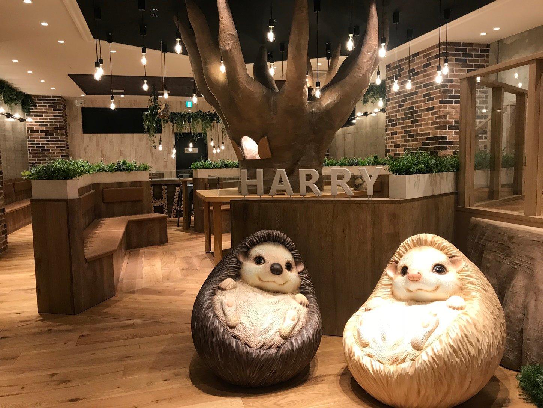 Hedgehog Cafe Harry Opens New Location In Yokohama