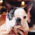 Dog-friendly Cafés: Wine and Dine Your Furry Best Friend at Yoyogi Park