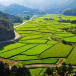 4 of the Best Farm Homestays for Experiencing Rural Japan in Oita