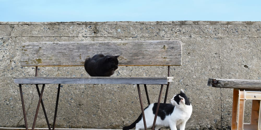 Cats at cat island in Kyushu