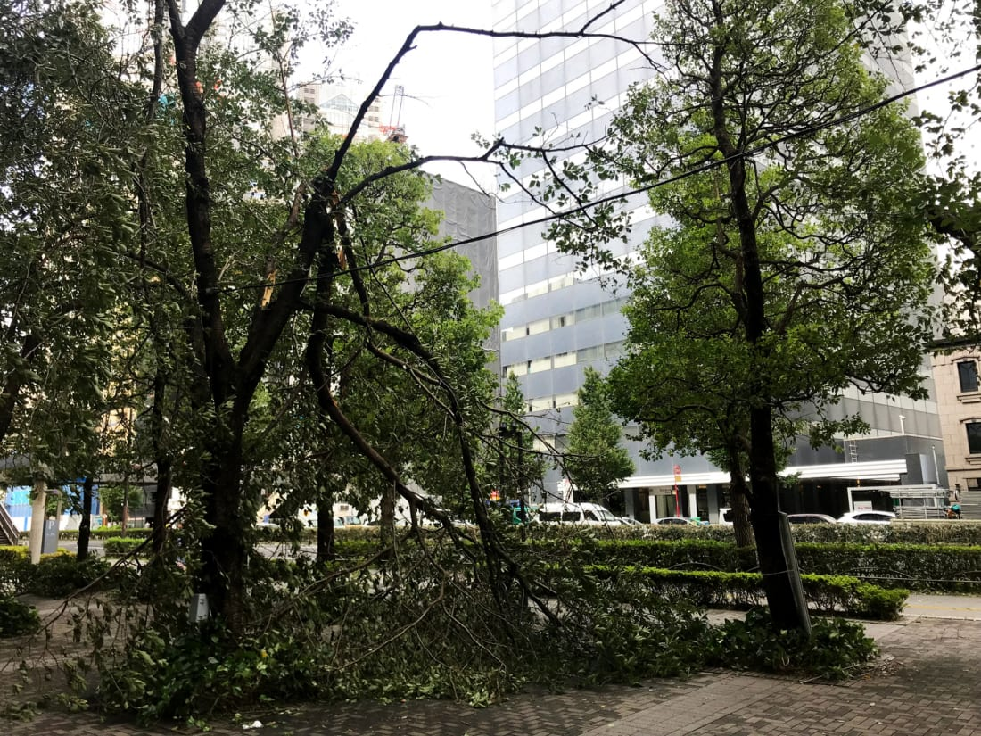 Fallen tree branches in Tokyo