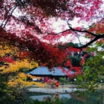 The Hills of Southern Kyoto are Alive with the Sights of Autumn