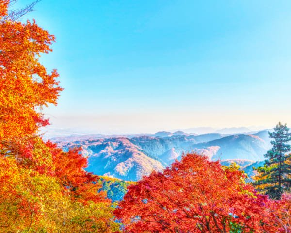 The Alternative Guide to Hiking Mount Takao