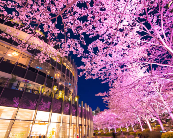 20 Things To Do This Weekend in Tokyo: March 20–22