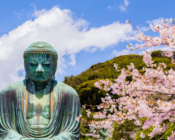 Day Trips from Tokyo: Where to See Cherry Blossoms in Kamakura