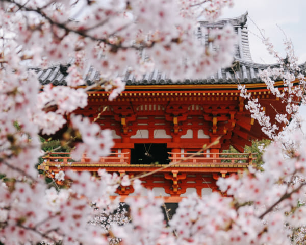 Travel Japan: Where to See Cherry Blossoms in Kyoto