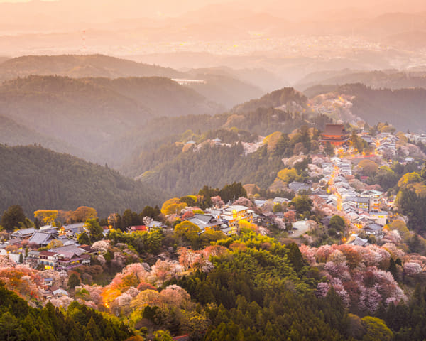 Travel Japan: Where to See Cherry Blossoms in Nara
