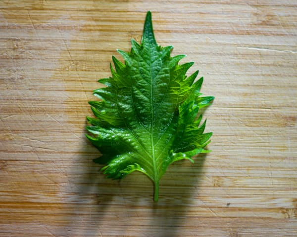 Seasonal Japanese Ingredients and How To Use Them: Shiso