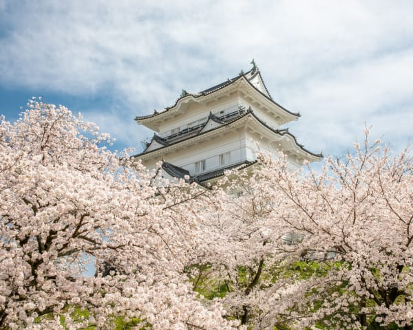 Odawara Guide: Top Seasonal Events and Things to Do for a Quick Getaway