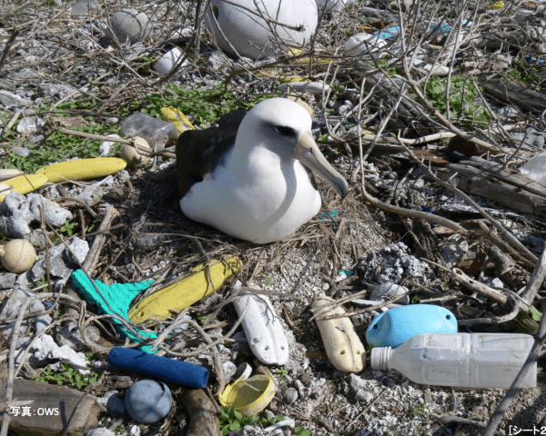 Japan's Plastic Footprint Is Larger Than You May Think