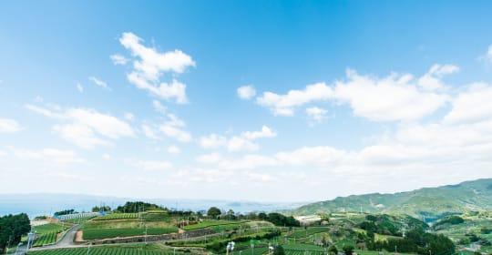 Nagasaki Tea online virtual tour